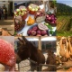 """Cartolina da """"Casola Valsenio, alla Festa dei Frutti e degli Animali dimenticati"""""""